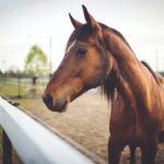 Hästfysioterapi i världsklass